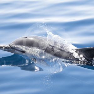 Bottle nose dolphin - Nature Stock Photo Agency