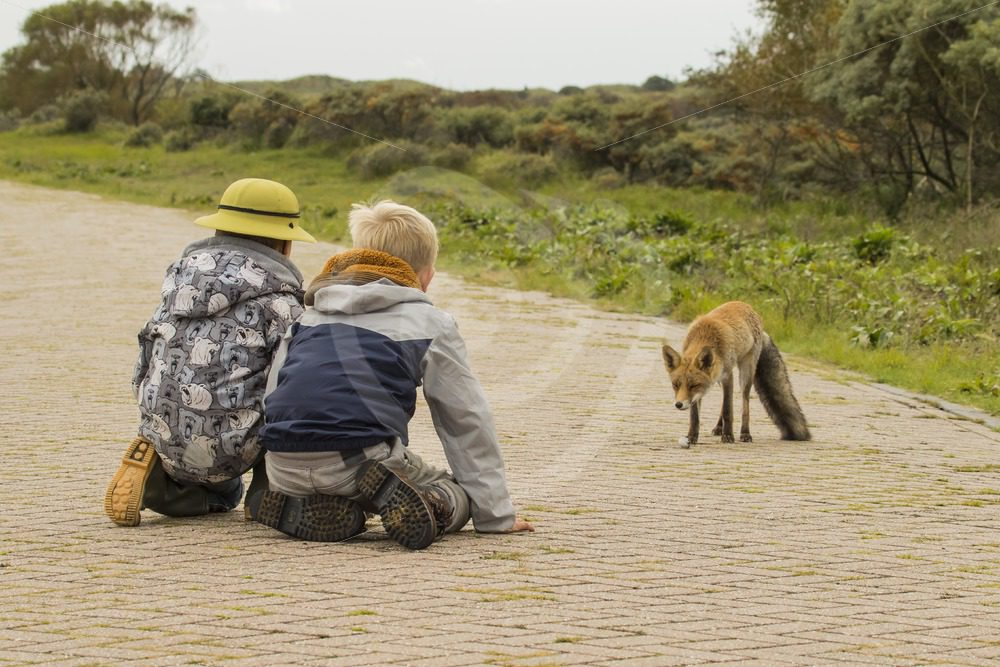2 kids with fox - Nature Stock Photo Agency