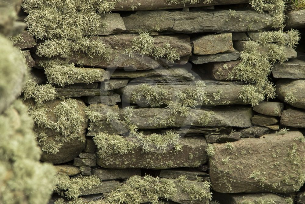 Ancient stone wall with moss - Nature Stock Photo Agency