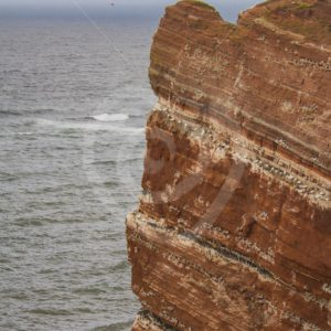 Cliffs of Helgoland full of storm birds - Nature Stock Photo Agency