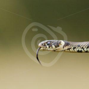 Reptiles & amfibians