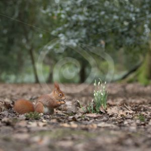 Squirrel in an autumn forest - Nature Stock Photo Agency