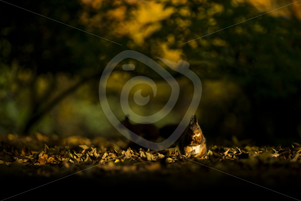 Squirrels in the sunny forest - Nature Stock Photo Agency