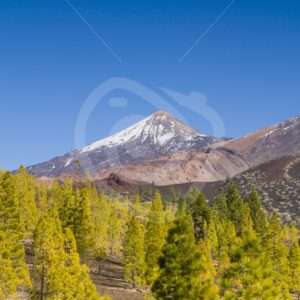 Forest view with Teide in Tenerife - Nature Stock Photo Agency