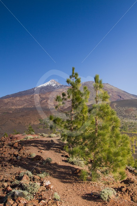 View of Teide in Tenerife - Nature Stock Photo Agency