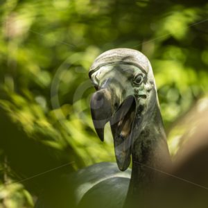 Dodo statue on Ile aux Aigrettes Nature Reserve - Nature Stock Photo Agency