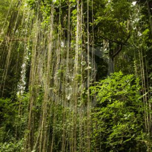 Lush tropical rainforest view - Nature Stock Photo Agency