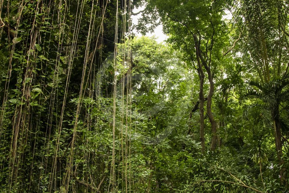 Mauritian rainforest view - Nature Stock Photo Agency