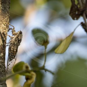 Cicada catching a glimp of sun - Nature Stock Photo Agency