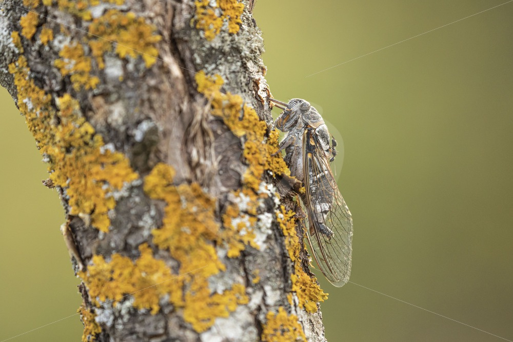 Cicada in a tree trunk - Nature Stock Photo Agency