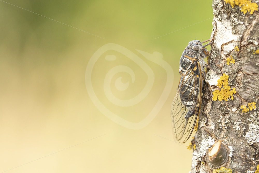 Cicada sitting on a tree during the day - Nature Stock Photo Agency