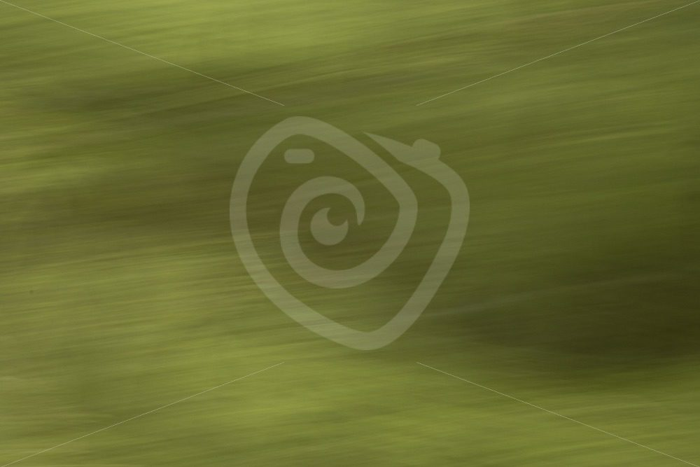 Abstract Canadian forest - Nature Stock Photo Agency
