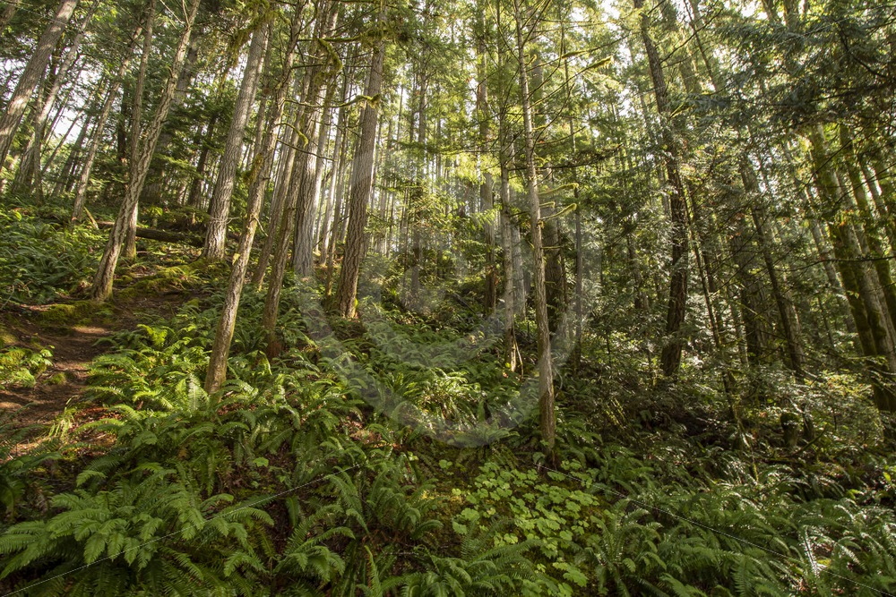 Canadian temperate rainforest - Nature Stock Photo Agency