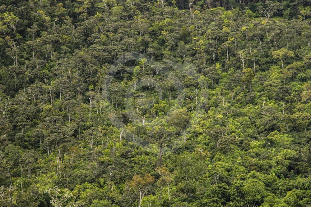 Mauritian canopy - Nature Stock Photo Agency