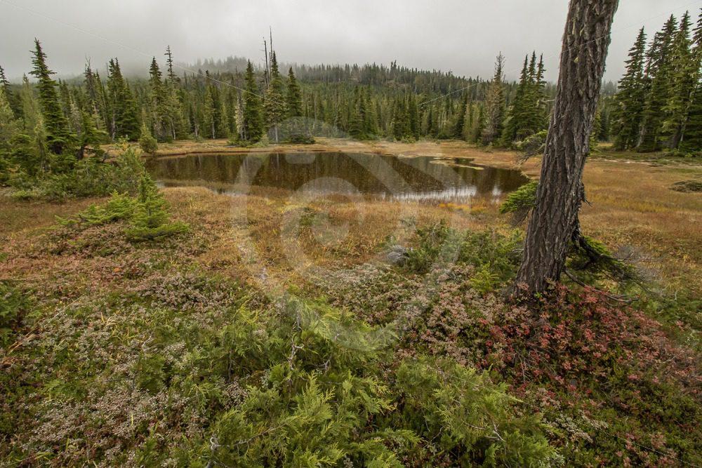 Mount Washington swamp area, Vancouver Island - Nature Stock Photo Agency