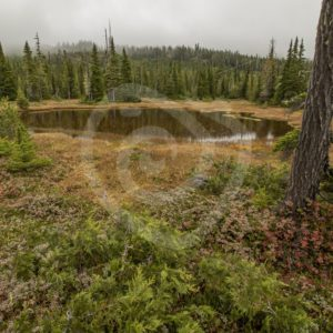 Mount Washington swamp area, Vancouver Island - Nature Stock Photo Agency
