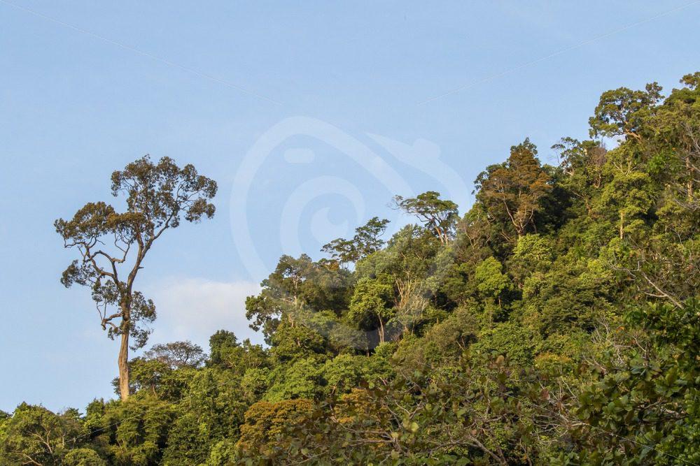 Malaysian rainforest - Nature Stock Photo Agency